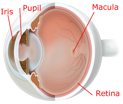Age Related Macular Degeneration (ARMD)